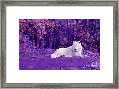 Dreaming Of Another World Framed Print by Vicki Spindler