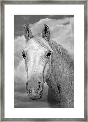 Dreaming Of Freedom Framed Print by Renee Forth-Fukumoto