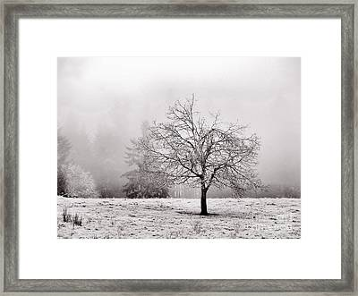 Dreaming Of Life To Come Framed Print