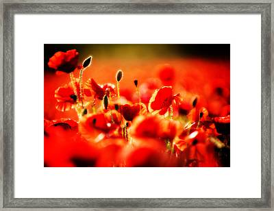Dreaming Of Poppies Framed Print by Meirion Matthias