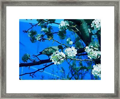Spring Framed Print by Coconut Lime Design