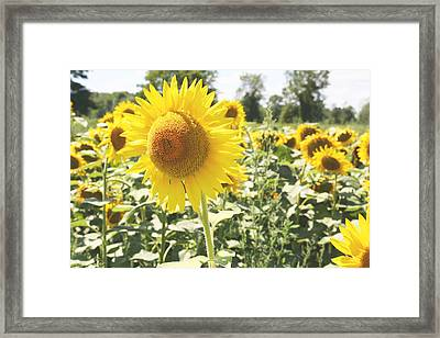 Framed Print featuring the photograph Dreaming Of Summer by Courtney Webster