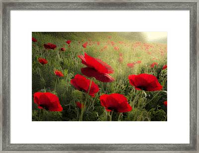 Dreaming Of The Morning Framed Print by Debra and Dave Vanderlaan