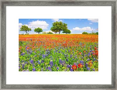 Dreaming Of Wildflowers Framed Print