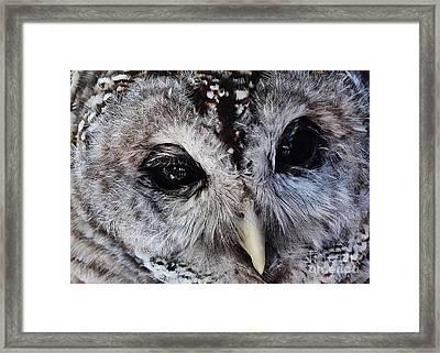 Dreaming Owl Framed Print