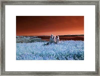 Dreaming Sisters Framed Print by Rebecca Parker
