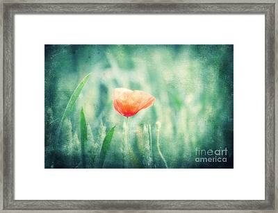 Dreaming Summer Framed Print by Angela Doelling AD DESIGN Photo and PhotoArt