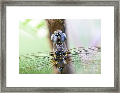 Dreaming With A Dragonfly Framed Print by Scotts Scapes