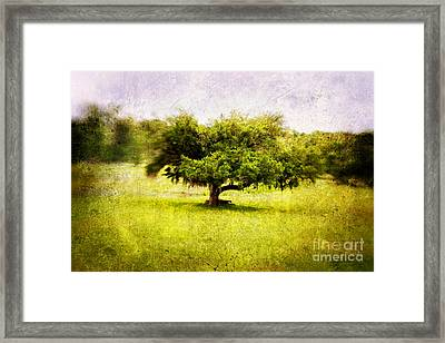Dreamland Framed Print