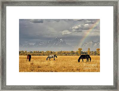 Dreams At The End Of The Rainbow Framed Print by Deby Dixon