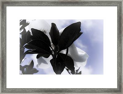 Framed Print featuring the photograph Dreams In The Sky by Janie Johnson