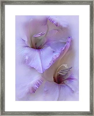 Dreams Of Purple Gladiola Flowers Framed Print by Jennie Marie Schell