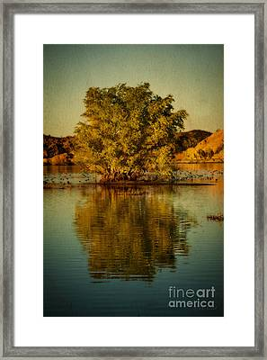 Dreams Of Reflection Framed Print by Medicine Tree Studios