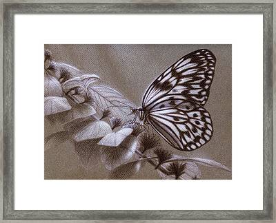 Dreams Sketch Framed Print by Shawn Kawa
