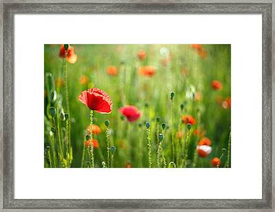 Dreamscape - Field Of Poppies Framed Print by Roeselien Raimond