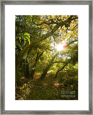 Dreamscape Framed Print by Gem S Visionary