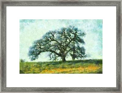 Dreamtime Oak Tree Framed Print