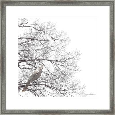 Dreamy Black And White Bird In Bare Tree Branches Framed Print by Julie Magers Soulen