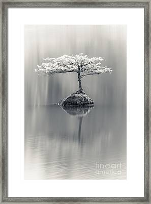 Dreamy Framed Print by Carrie Cole