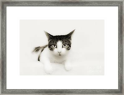 Dreamy Cat Framed Print by Andee Design