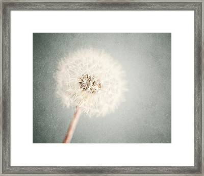 Dreamy Dandelion In Pastel Blue And Cream  Framed Print by Lisa Russo