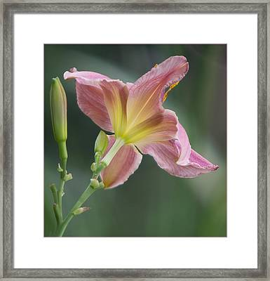 Framed Print featuring the photograph Dreamy Daylily by Patti Deters