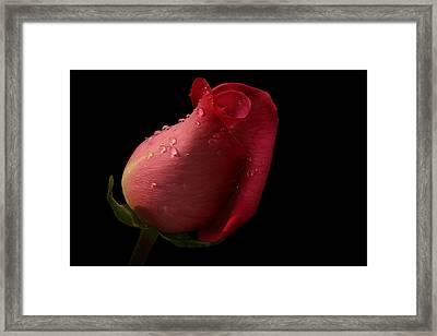 Dreamy Framed Print by Doug Norkum