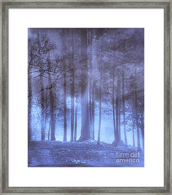 Dreamy Forest Framed Print