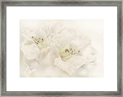 Dreamy Ivory White Azalea Flowers Framed Print by Jennie Marie Schell