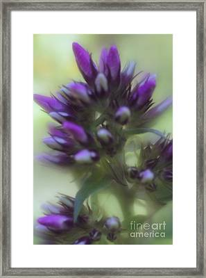 Framed Print featuring the photograph Dreamy Lavendar Buds by Mary Lou Chmura
