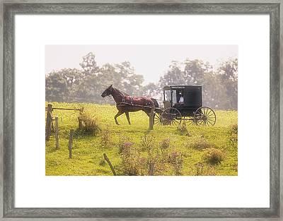 Dreamy Morning Framed Print by Marcia Colelli
