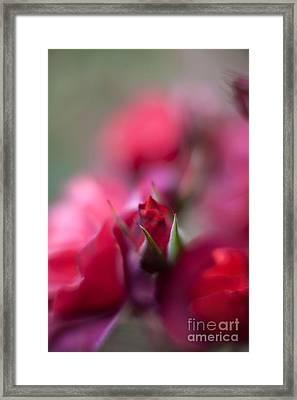 Dreamy Nest Framed Print by Mike Reid
