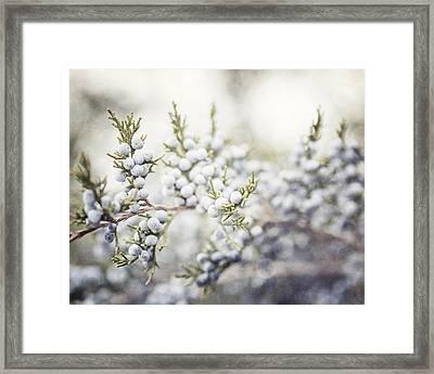 Dreamy Pastel Juniper Berries Framed Print by Lisa Russo