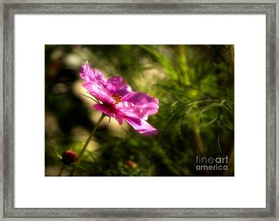 Framed Print featuring the photograph Dreamy Pink Comos by Marjorie Imbeau