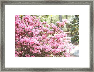Dreamy Pink South Carolina Apple Blossom Trees - South Carolina Spring Pink Blossoms Tree Framed Print by Kathy Fornal