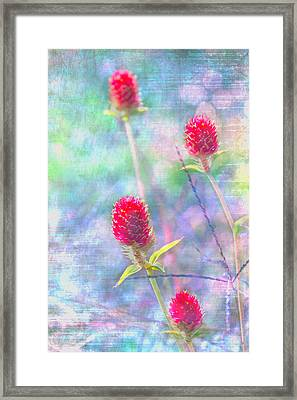 Dreamy Red Spiky Flowers Framed Print by Karen Stephenson