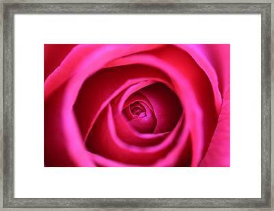 Dreamy Rose Framed Print by Lorella  Schoales