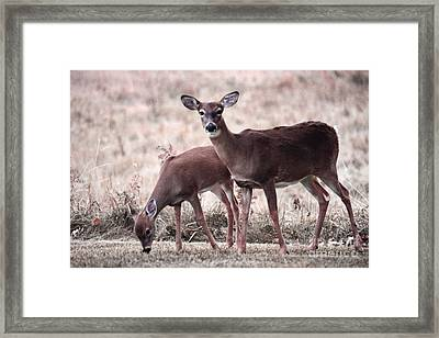Deer Nature Doe Art - Deer Female Does Woodlands Trees Nature  Framed Print by Kathy Fornal