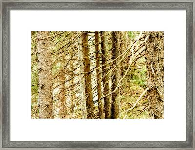 Dreamy Trees Framed Print by Maurizio Incurvati