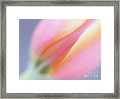 Dreamy Tulip Framed Print by Irina Wardas