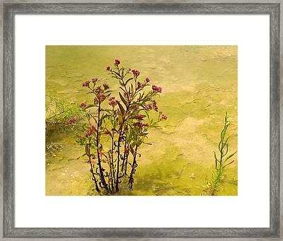 Dredge Basin Bouquet Framed Print by Laura Ragland