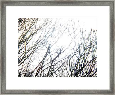 Drenched In Sunlight Or Blinded By It Framed Print by Corinne Elizabeth Cowherd
