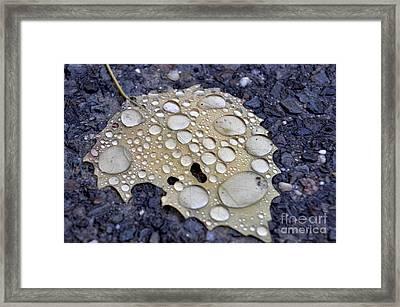 Drenched Leaf Framed Print