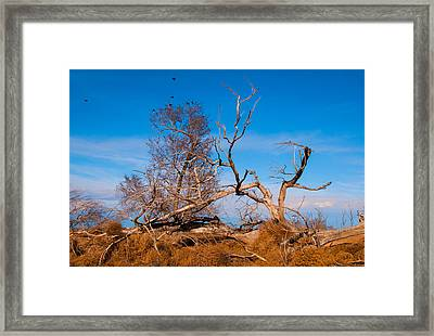 Dressed Down For Winter Framed Print
