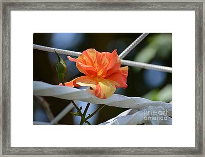 Dressed For A Holiday Framed Print