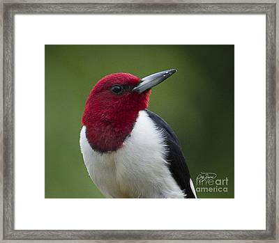 Dressed For Success Framed Print by Cris Hayes