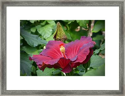 Dressed In Her Finery Framed Print