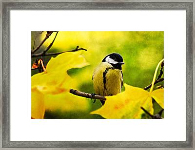 Dressed To The Season Framed Print