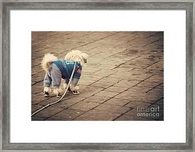 Dressed Up Dog Framed Print by Juli Scalzi