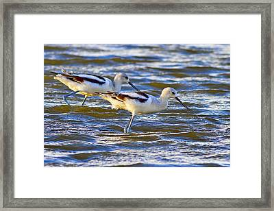 Framed Print featuring the photograph Dribbling Contest by Gary Holmes
